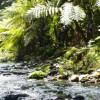 Na samote v lese: Ako nás príroda lieči