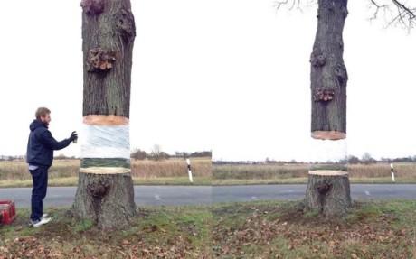 Úžasné! Tento strom vyzerá ako keby plával vo vzduchu