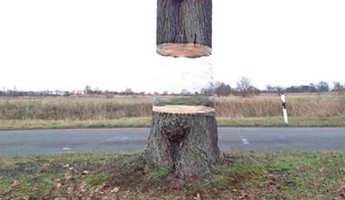 Úžasné! Tento strom vyzerá ako keby plával vo vzduchu (video)