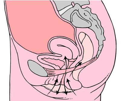 Kegelové cviky pre lepší sex! Zlepšia erekciu a oddialia ejakuláciu 1