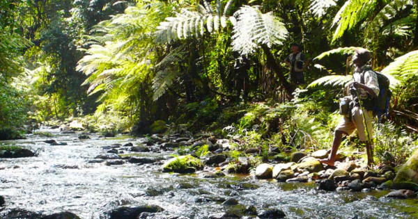 Na samote v lese Ako nás príroda lieči