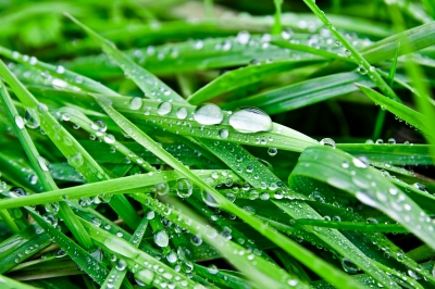 Tancujúca rastlina… že neveríte? Tak to sa budete diviť!